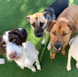 Pet Resort Simi Valley CA