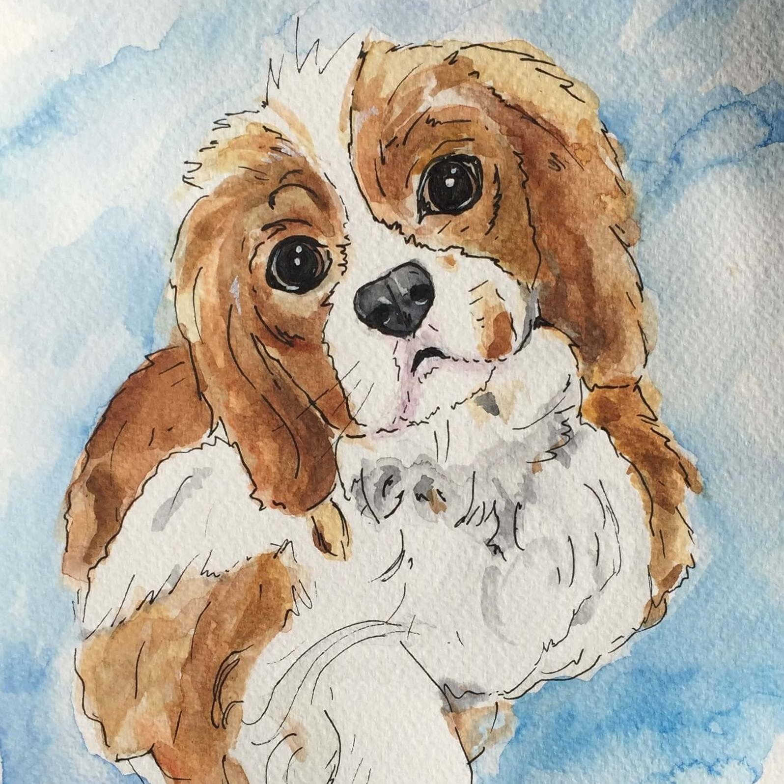 Cavalier Watercolour painting