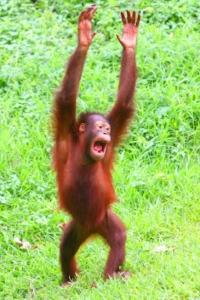 hands-up-monkey-blog.jpg