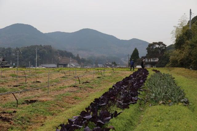 IZUHO-organic-farm-japan.jpg