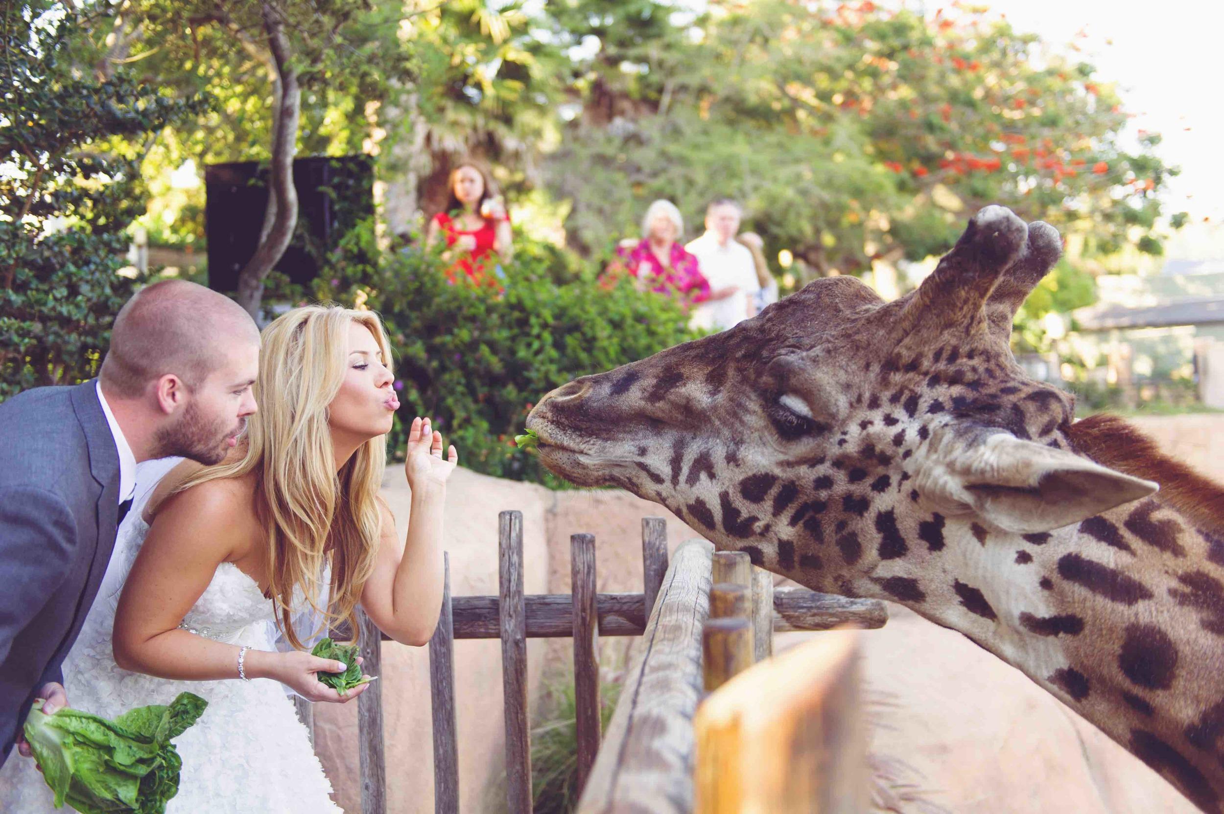 UC_santa_Barbara_Zoo_Wedding1781.jpg