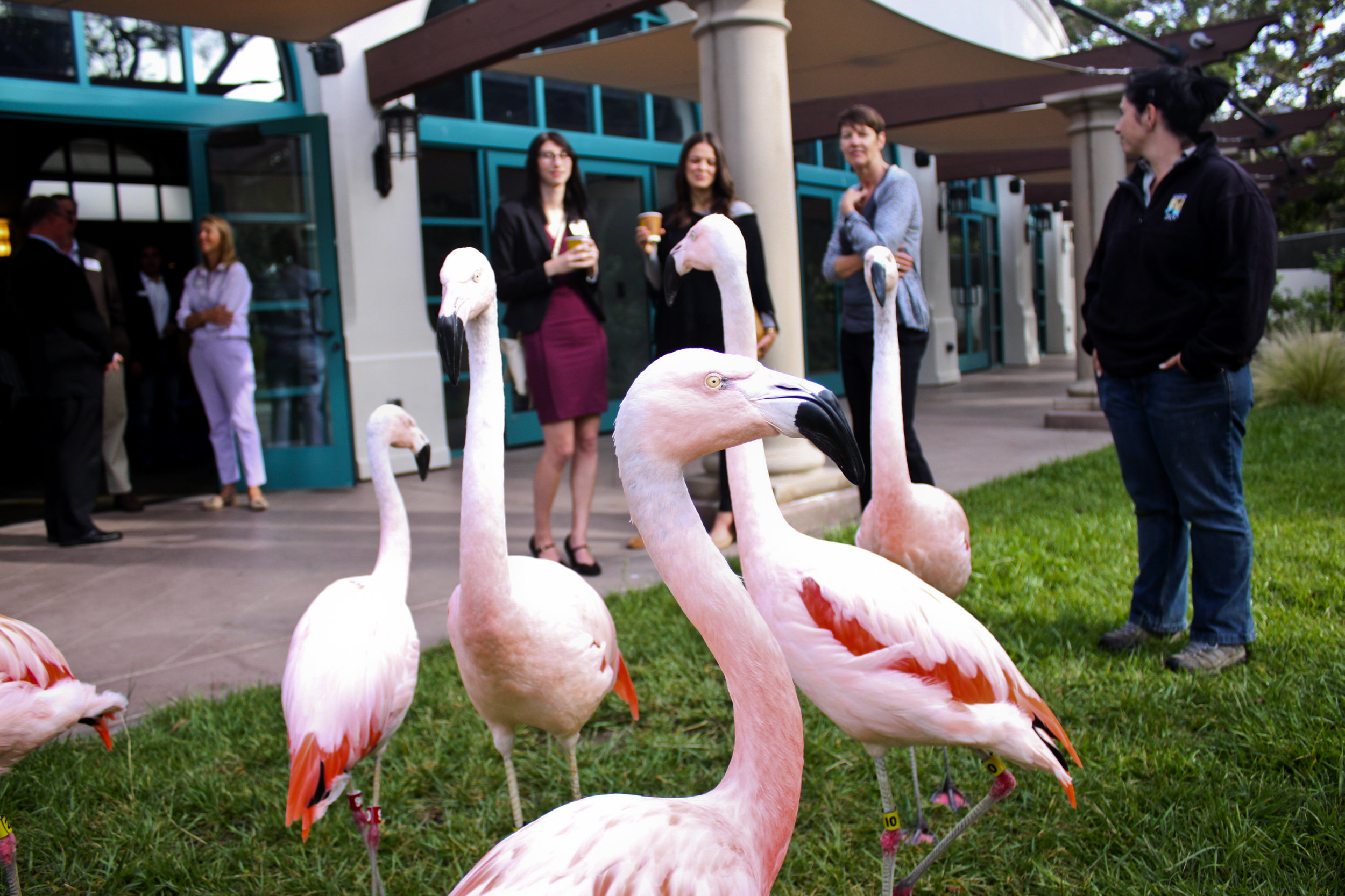 Flamingo Encounter 1.jpg