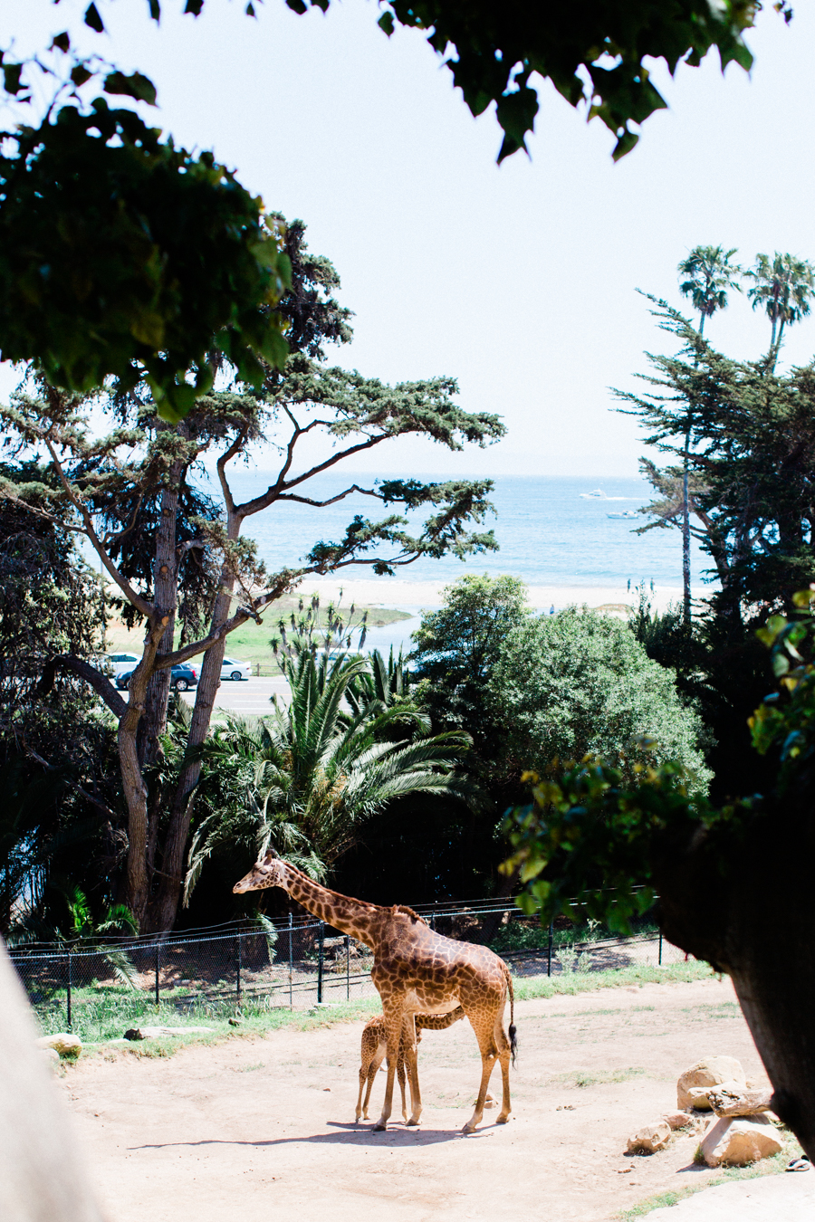 INSTAGRAM_Santa_Barbara_Zoo_Wedding-29.jpg
