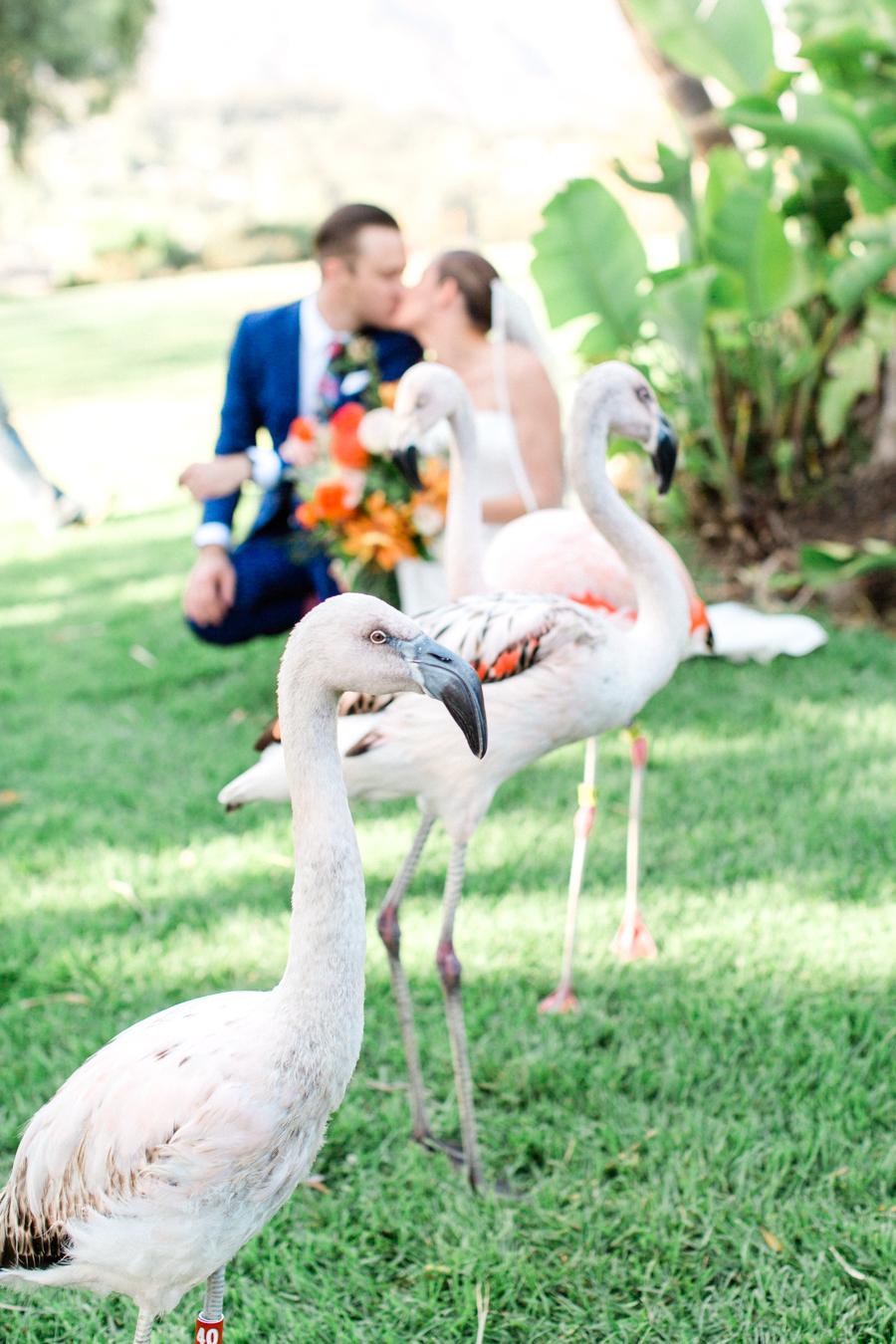 INSTAGRAM_Santa_Barbara_Zoo_Wedding-156.jpg