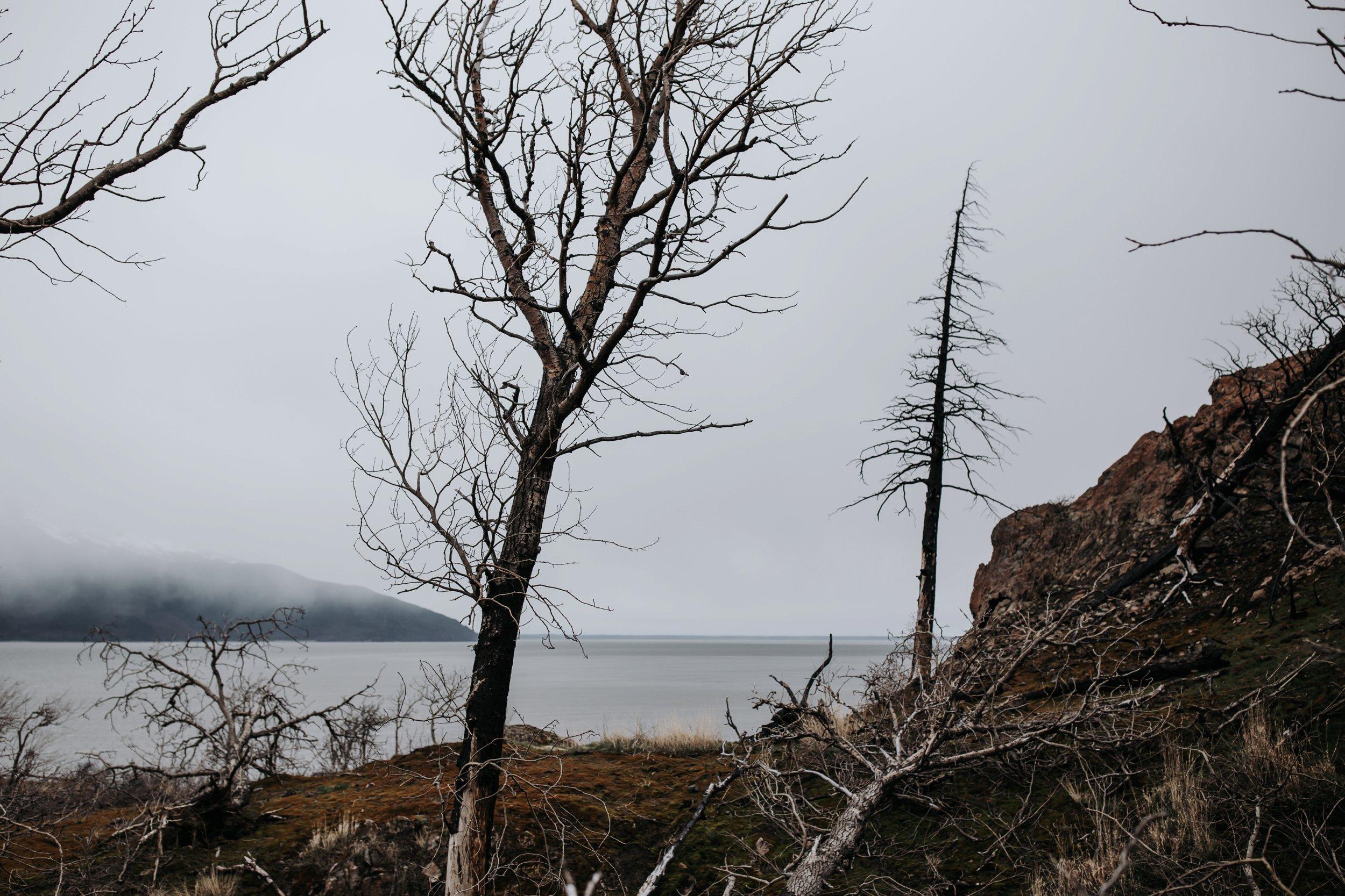forest fire damage alaska