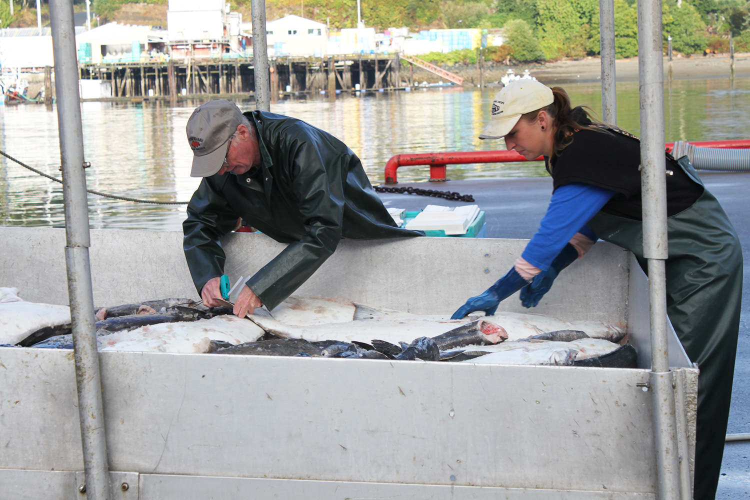 Wild-Pacific-Halibut-Harvest.jpg