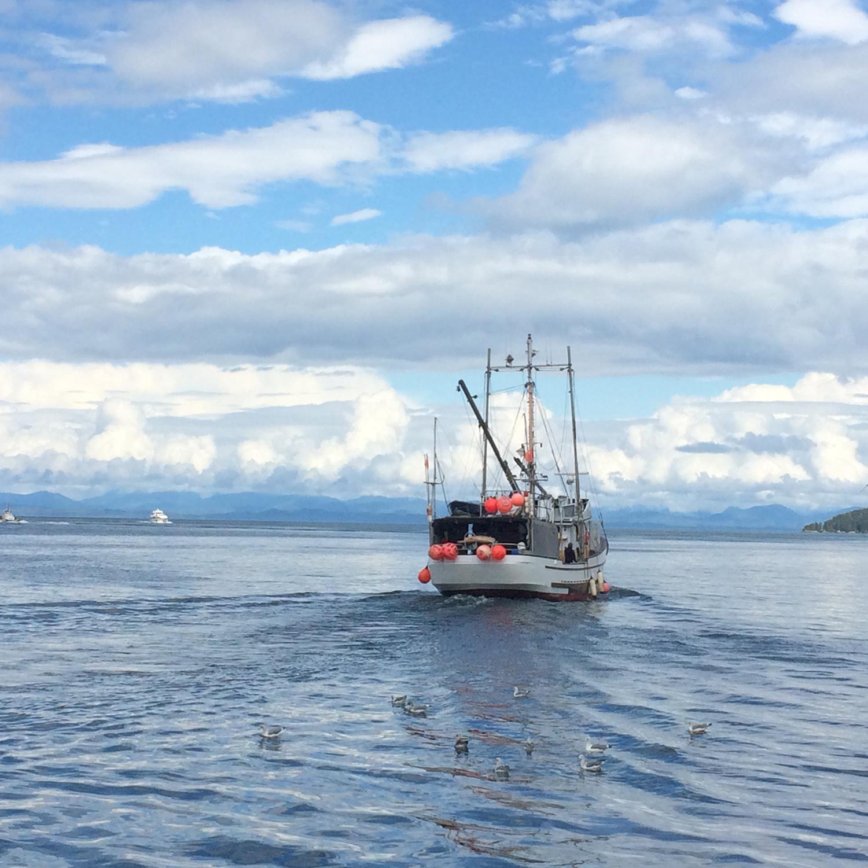Wild-Pacific-Halibut-Fishery.jpg