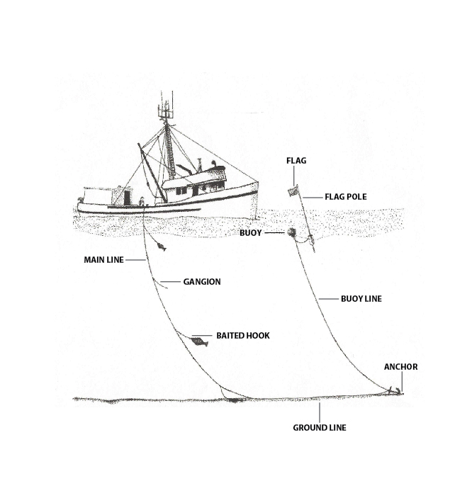 Source: Adapted from the International Pacific Halibut Commission Tech Report 59. Page 23.
