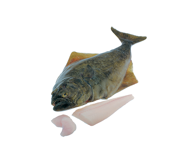 Halibut-Product-Forms-Sml.jpg