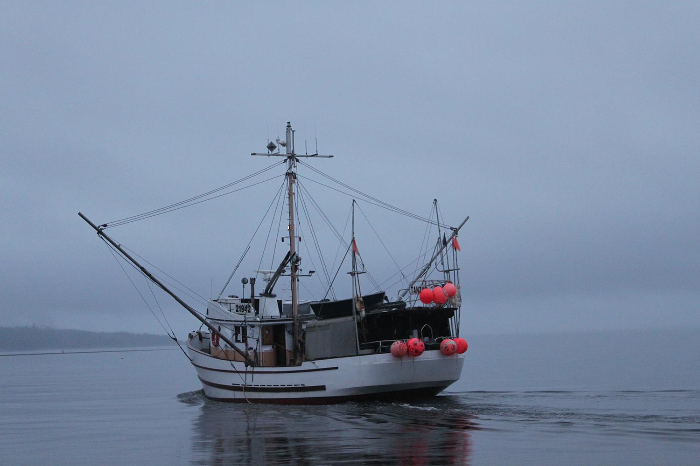 Wild-pacific-halibut-harvesting-3.JPG