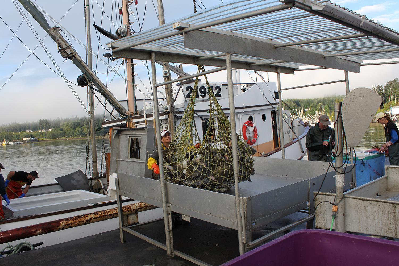 Wild-pacific-halibut-harvesting-4.JPG