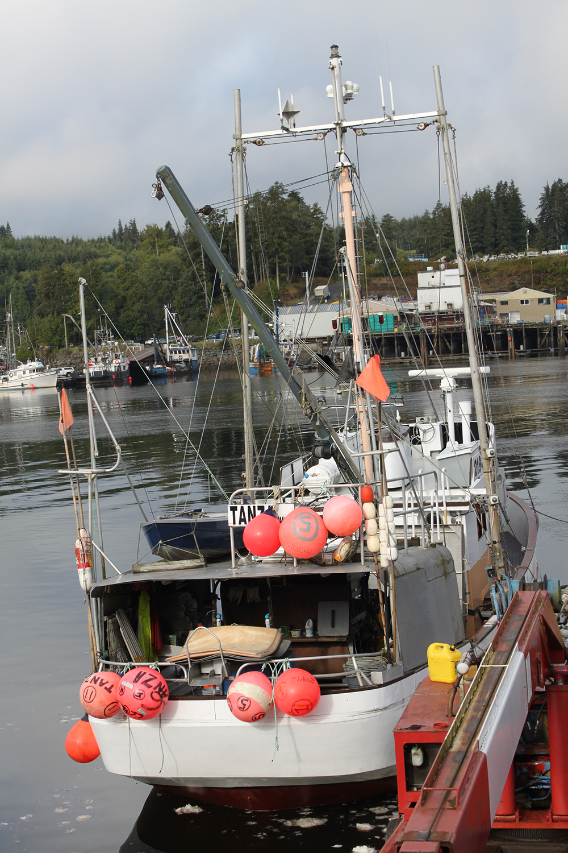 Wild-pacific-halibut-harvesting-10.JPG