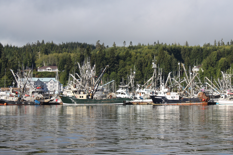 Wild-pacific-halibut-harvesting-11.JPG