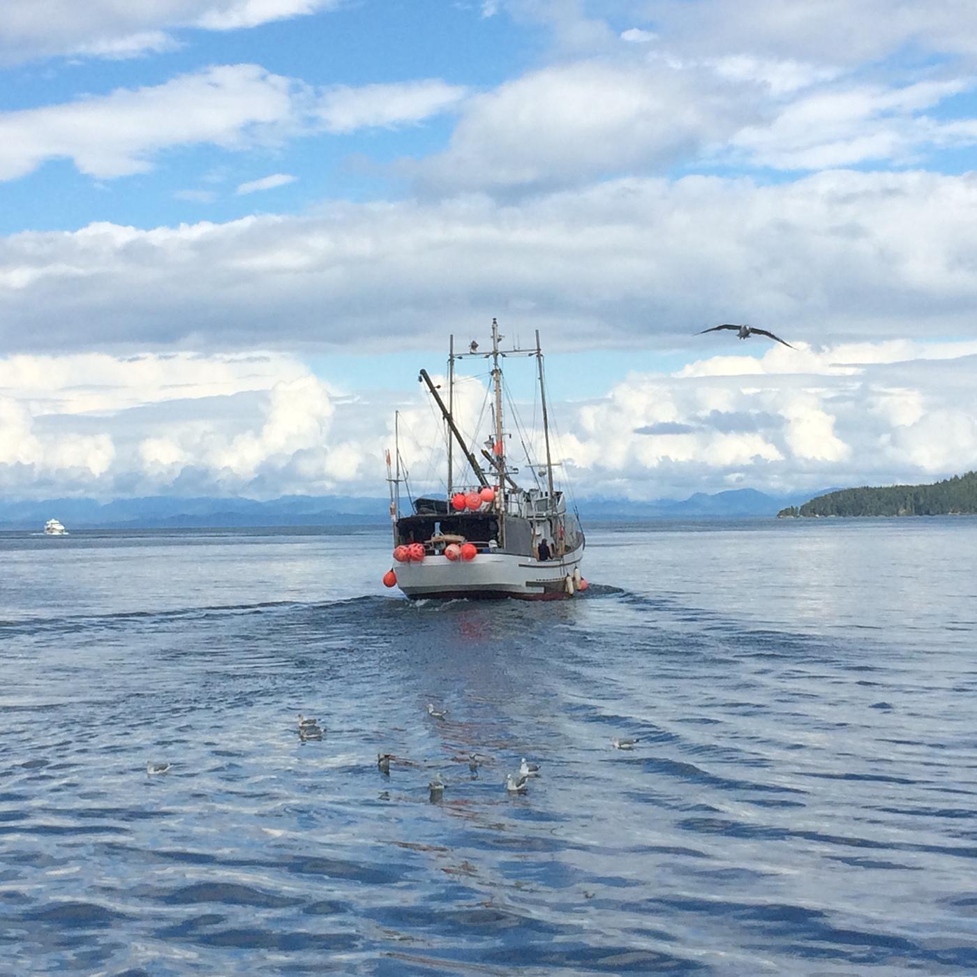 Wild-pacific-halibut-harvesting-12.JPG