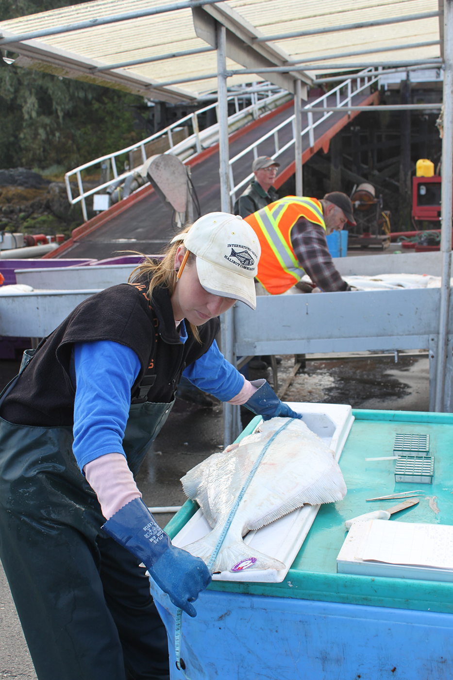 Halibut_Science_Research_2.JPG