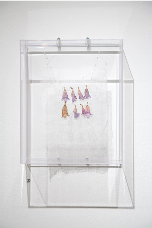 Votive,  2008, dried Jackaranda flowers , linen thread, muslin, perspex box, 25cm(w)x40cm(h)x10cm(d)