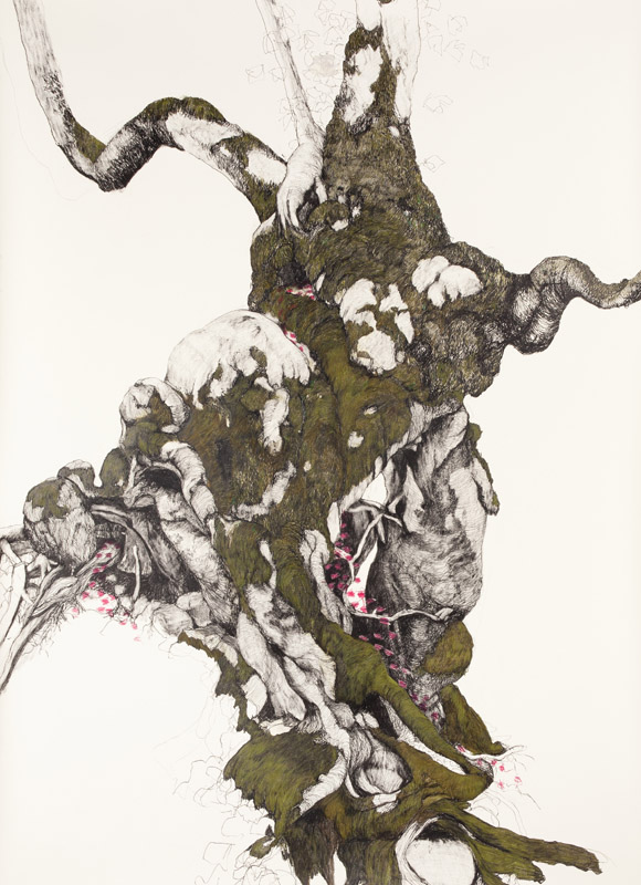 'Dryad',  2012, graphite and coloured pencil on Somerset paper, 170x128cm