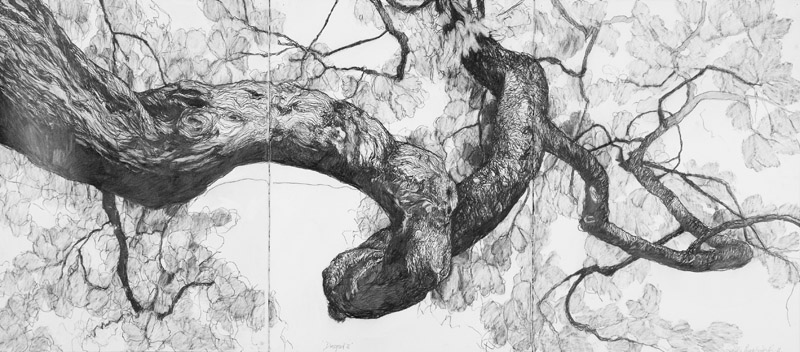 Dryad 1,  2012, graphite on Arches paper, 95x190cm (triptych)