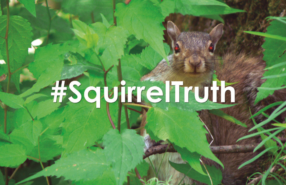 Support the #SquirrelTruth