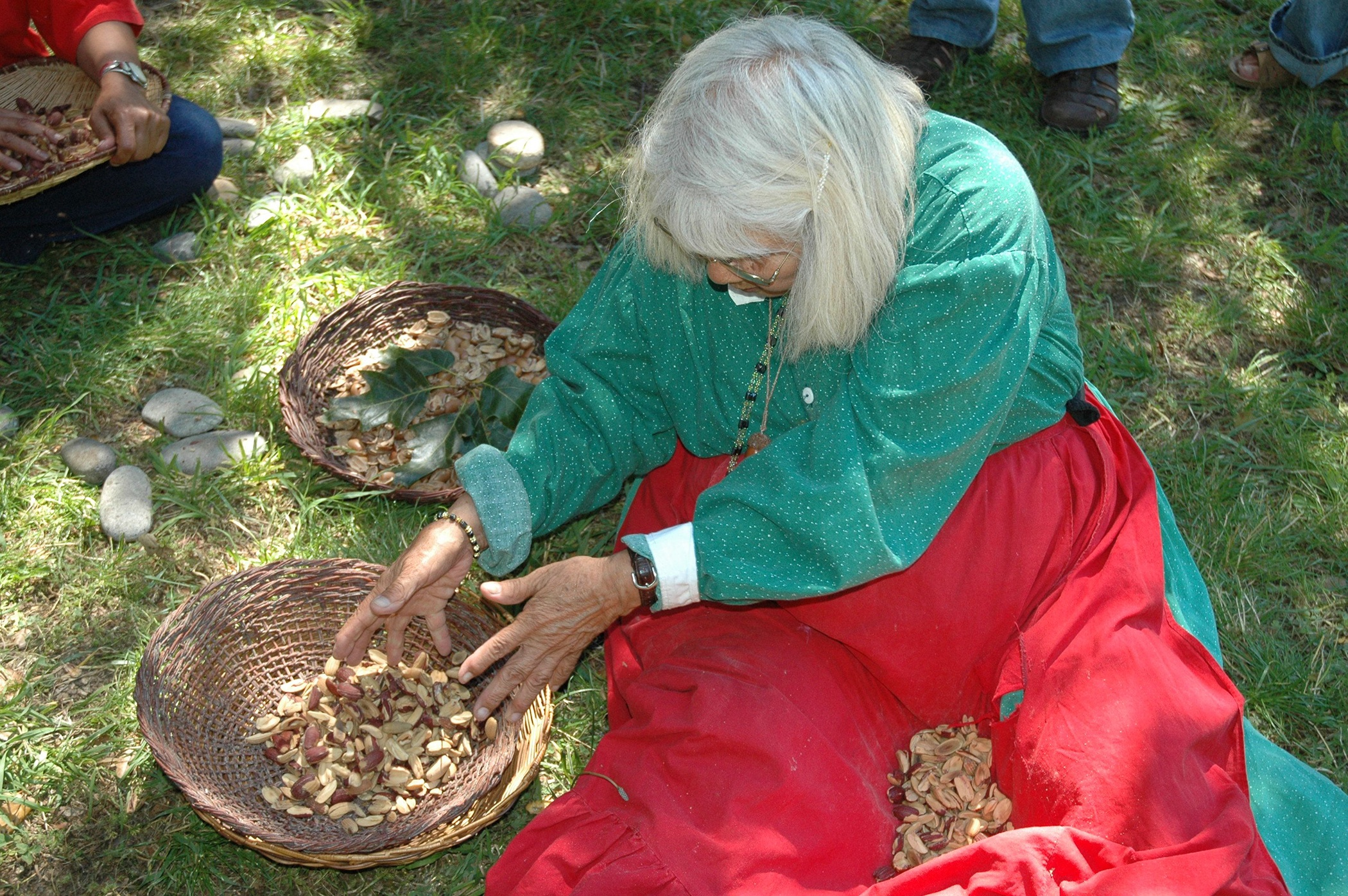 Elder with Acorns300dpi.jpg