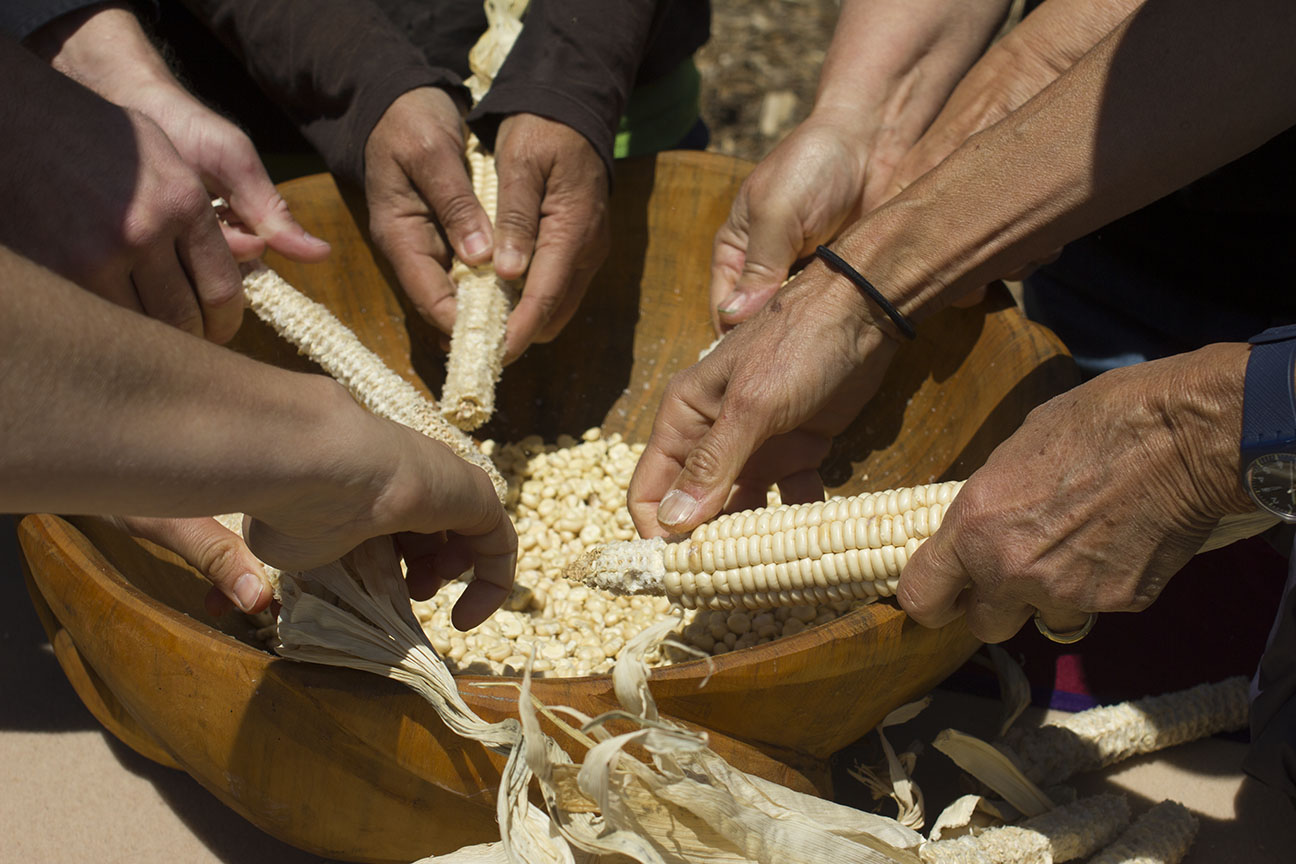 Onëo, Seneca white corn