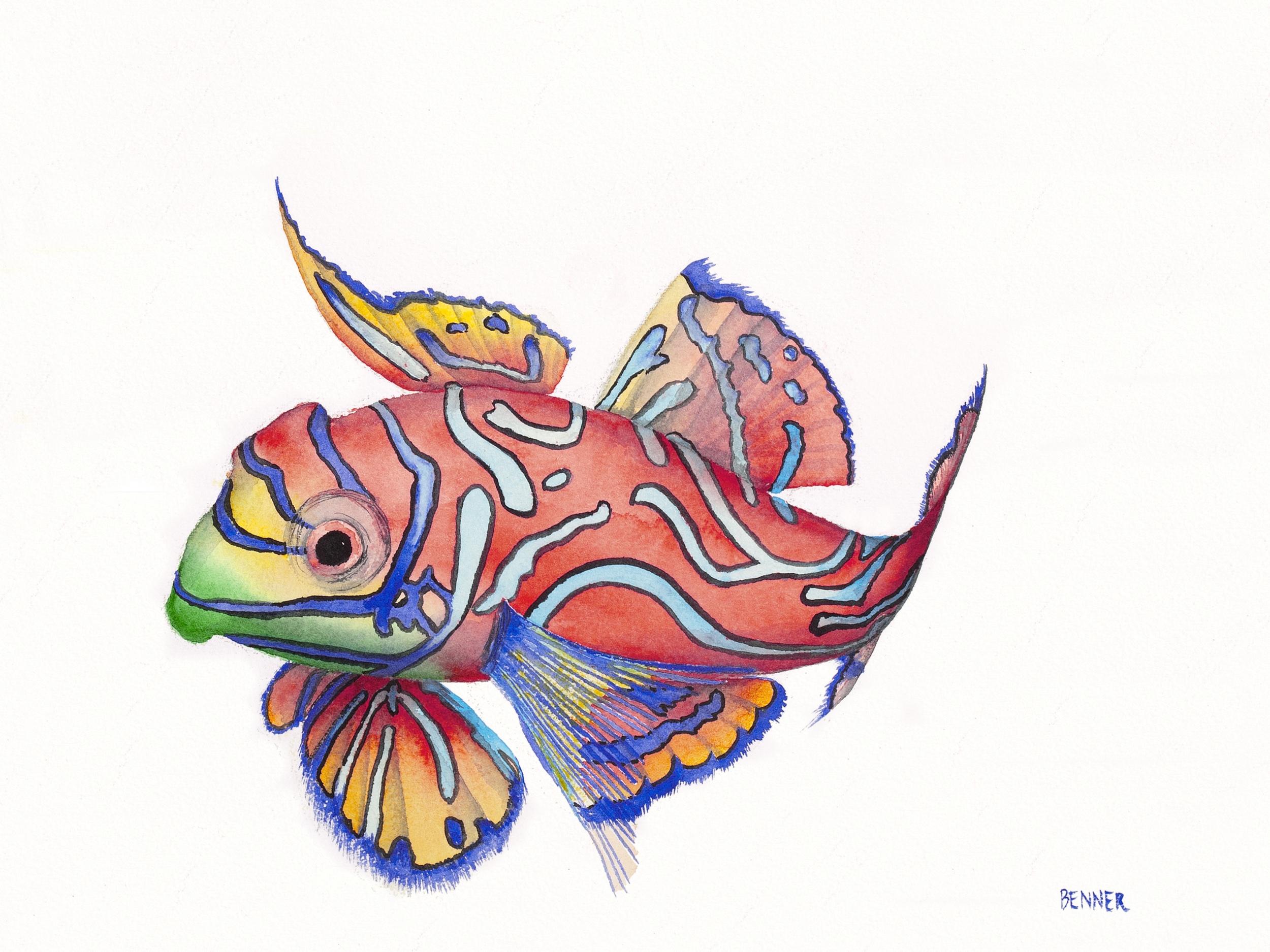 Mandarin Fish v2 12x9 300pp Mac.jpg