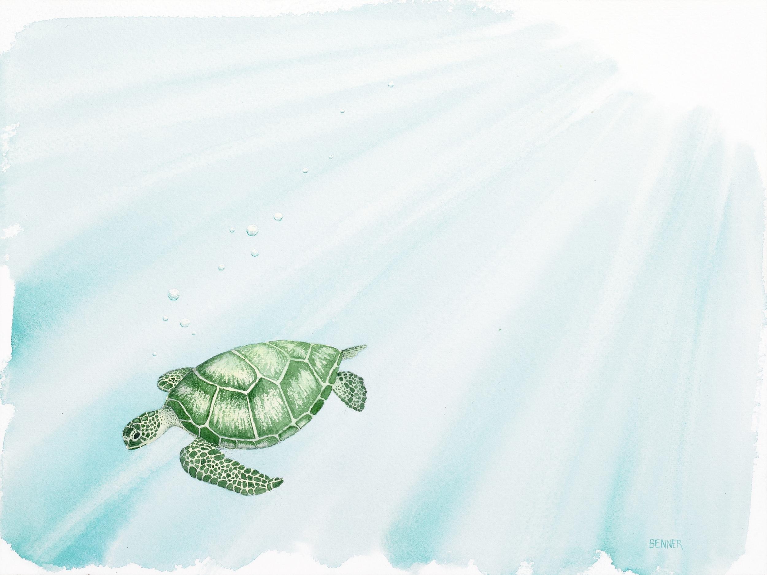Grn Turtle-1 v2 12x9 300ppi Mac.jpg