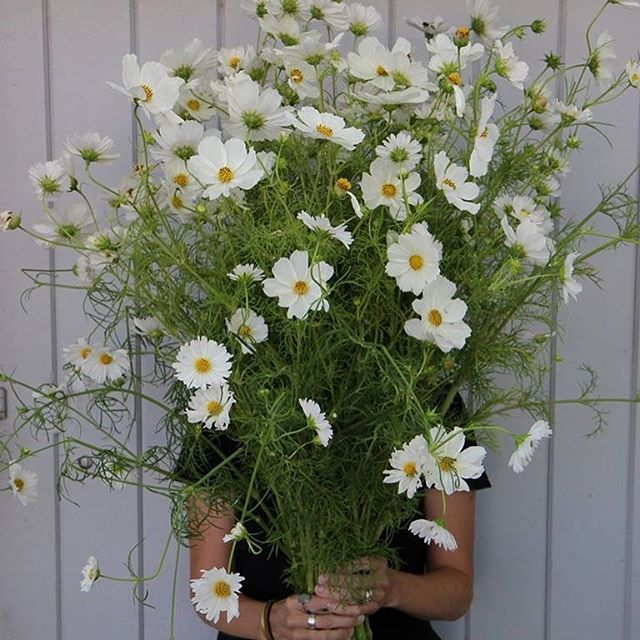 WORKSHOP ANNOUNCEMENT!!! Come join @chlorisfloral next Sunday, July 30th for a floral design workshop hosted by @truckandbarter at the @hotelpetaluma! You'll find a link to details and tickets in @chlorisfloral's profile. Attendees will be creating floral centerpieces with local blooms, discussing color palettes and learning how to create natural movement in your bouquets. Light bites and bubbly will be served and participants are also invited to exclusively enjoy 10% off everything in @truckandbarter the day of the workshop. Hope to see you there! #petaluma #sonomacounty #floralworkshop #floraldesignworkshop #chlorisfloral #bayarea #sanfrancisco