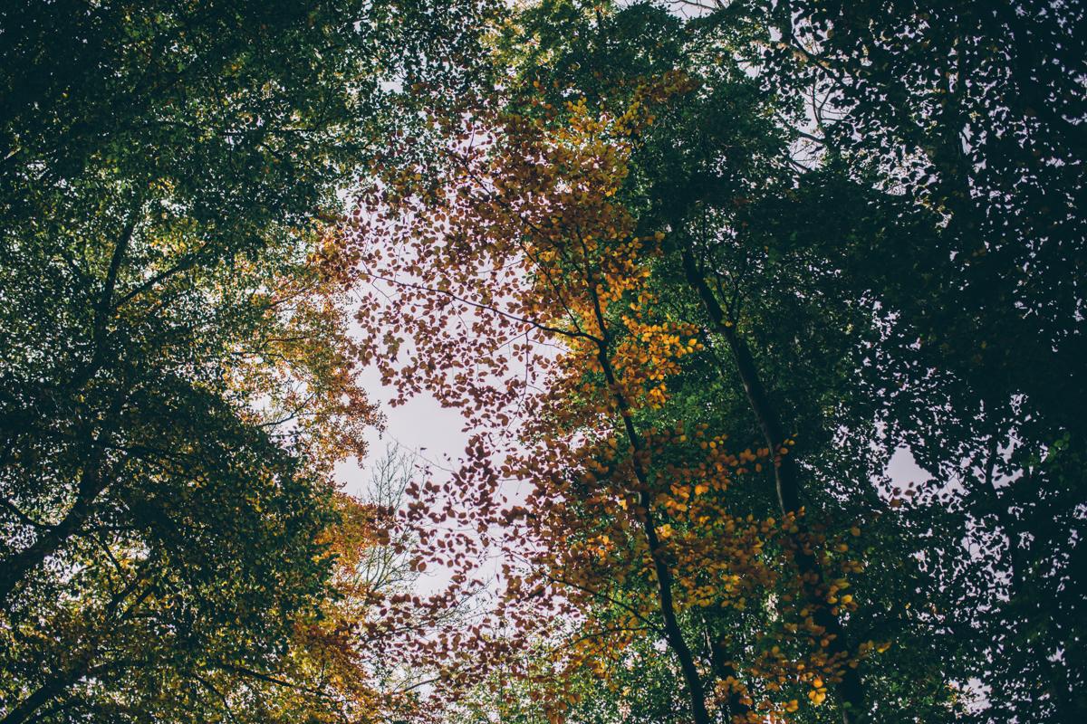 Faye + mark Leigh Woods Preshoot Web NaomiJanePhotography-13.jpg