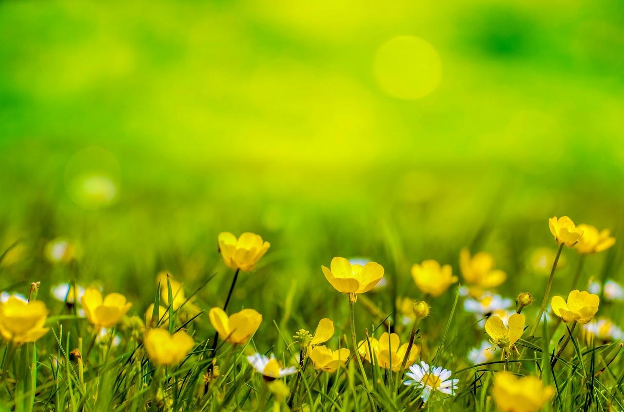 spring-316535_1280.jpg