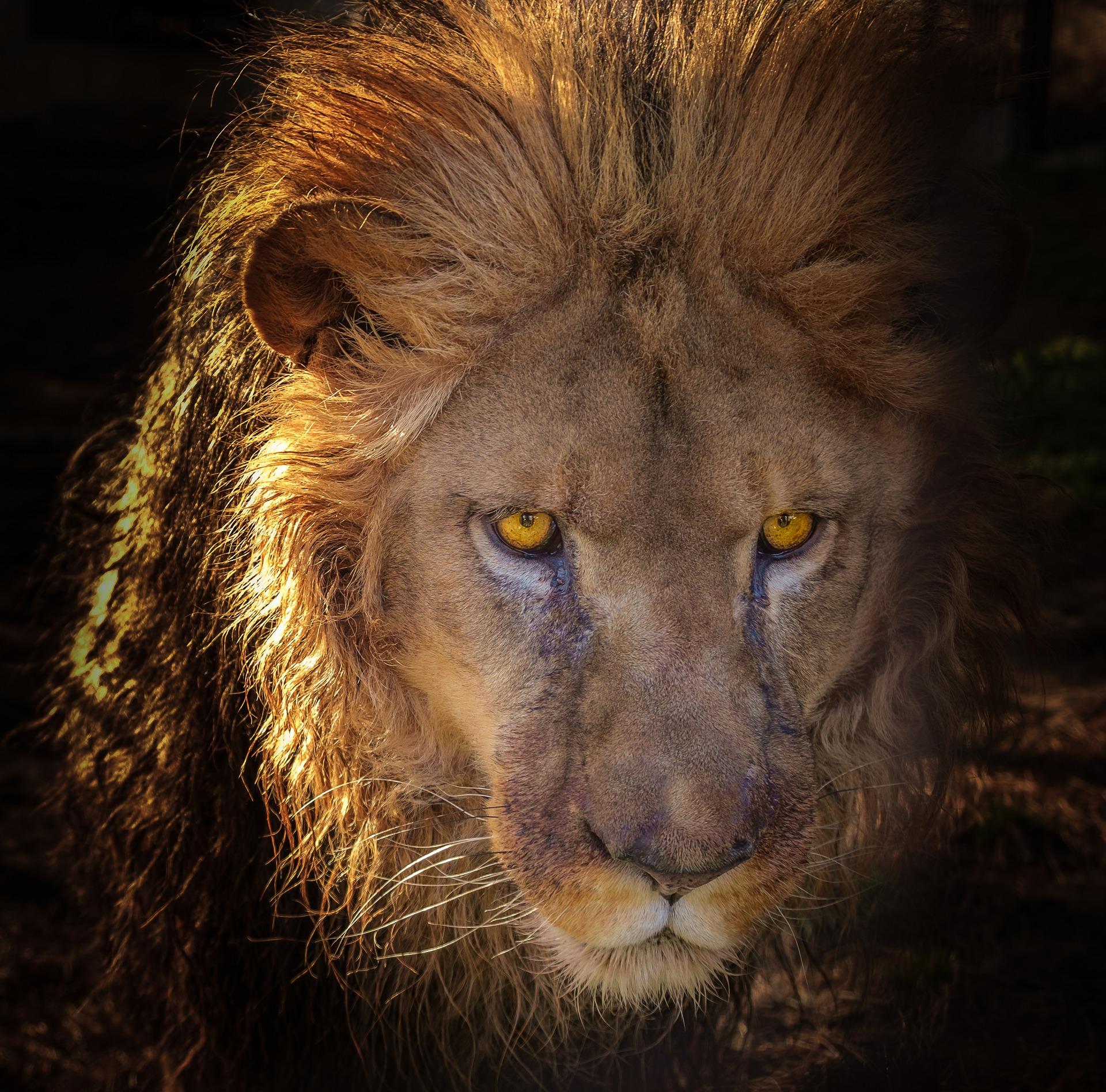 lion-3070285_1920.jpg