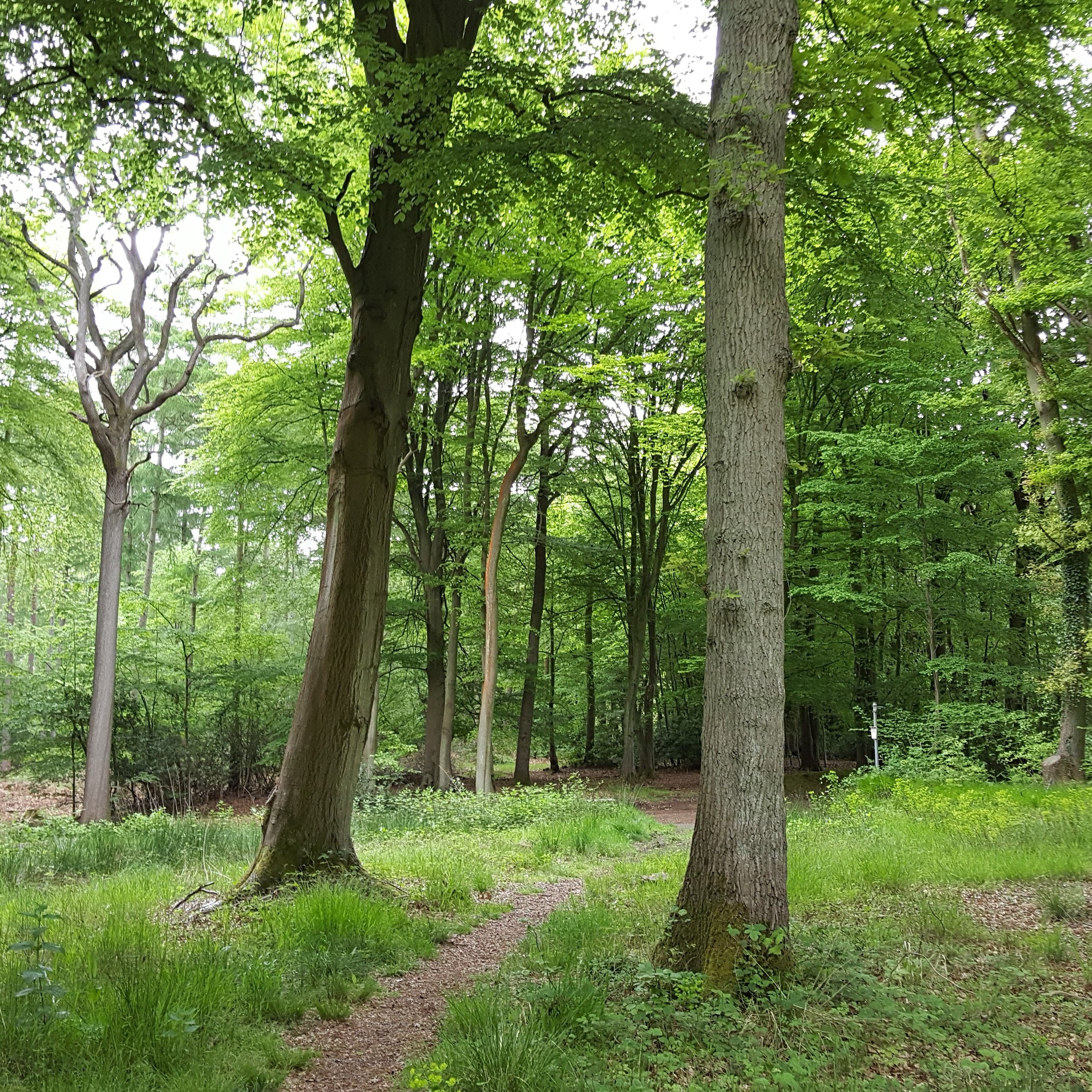 I took myself off for a woodland walk before heading back down the M4