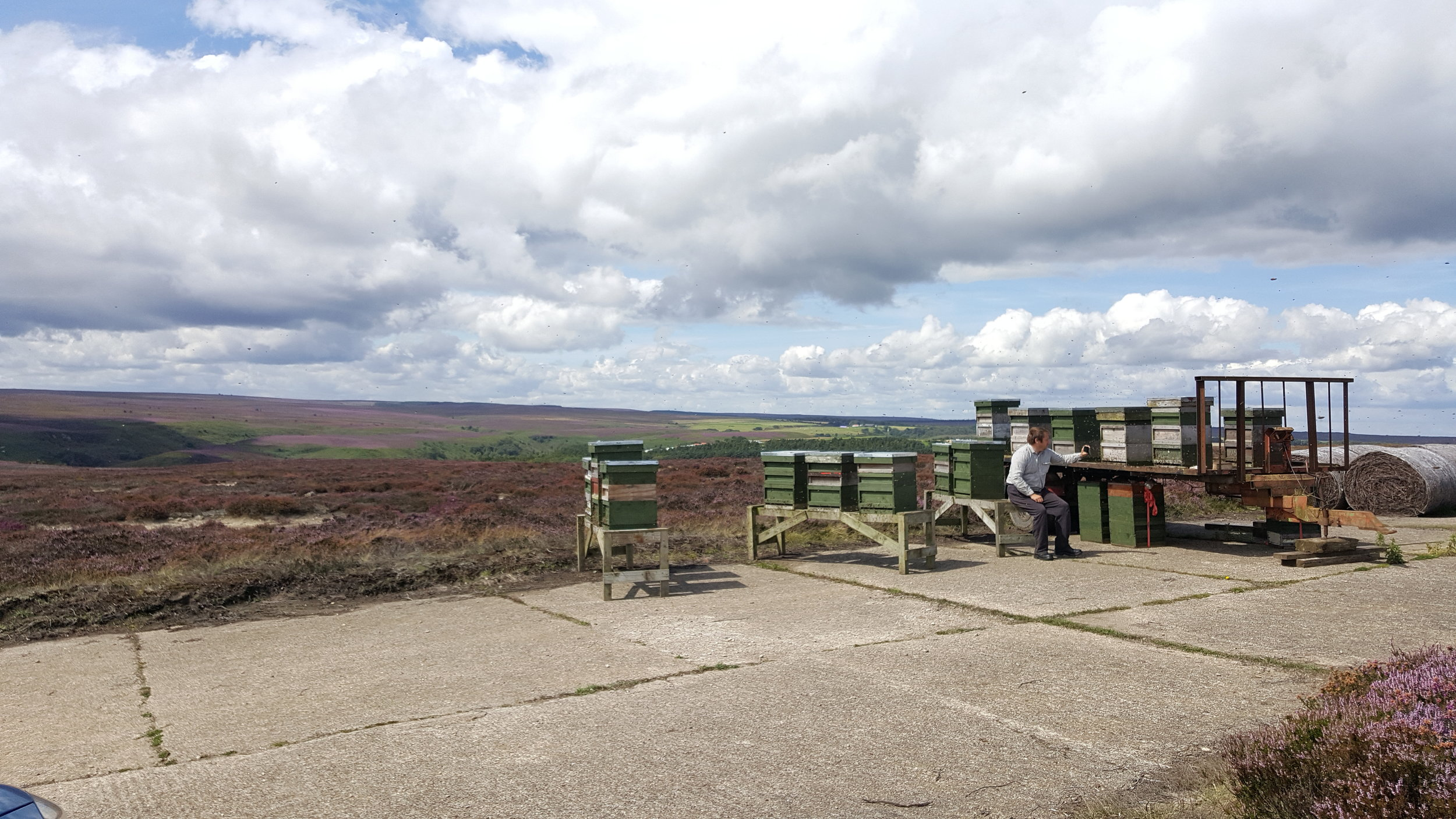 Jeremy Smith and his bees on the heather in Yorkshire