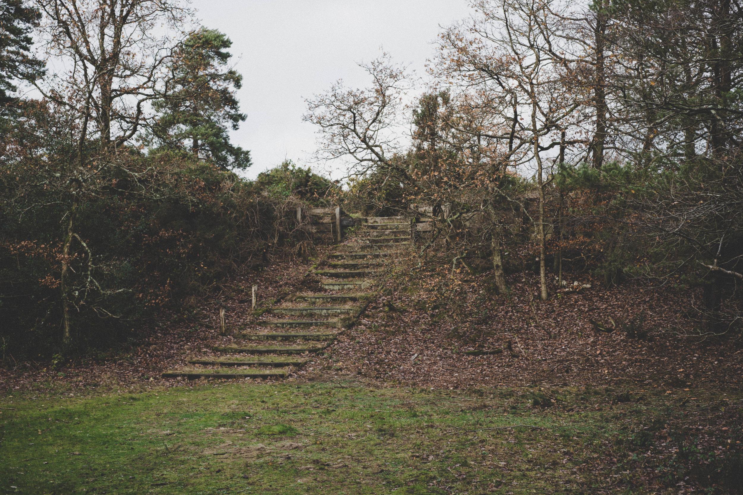 Holwood Park, 2018