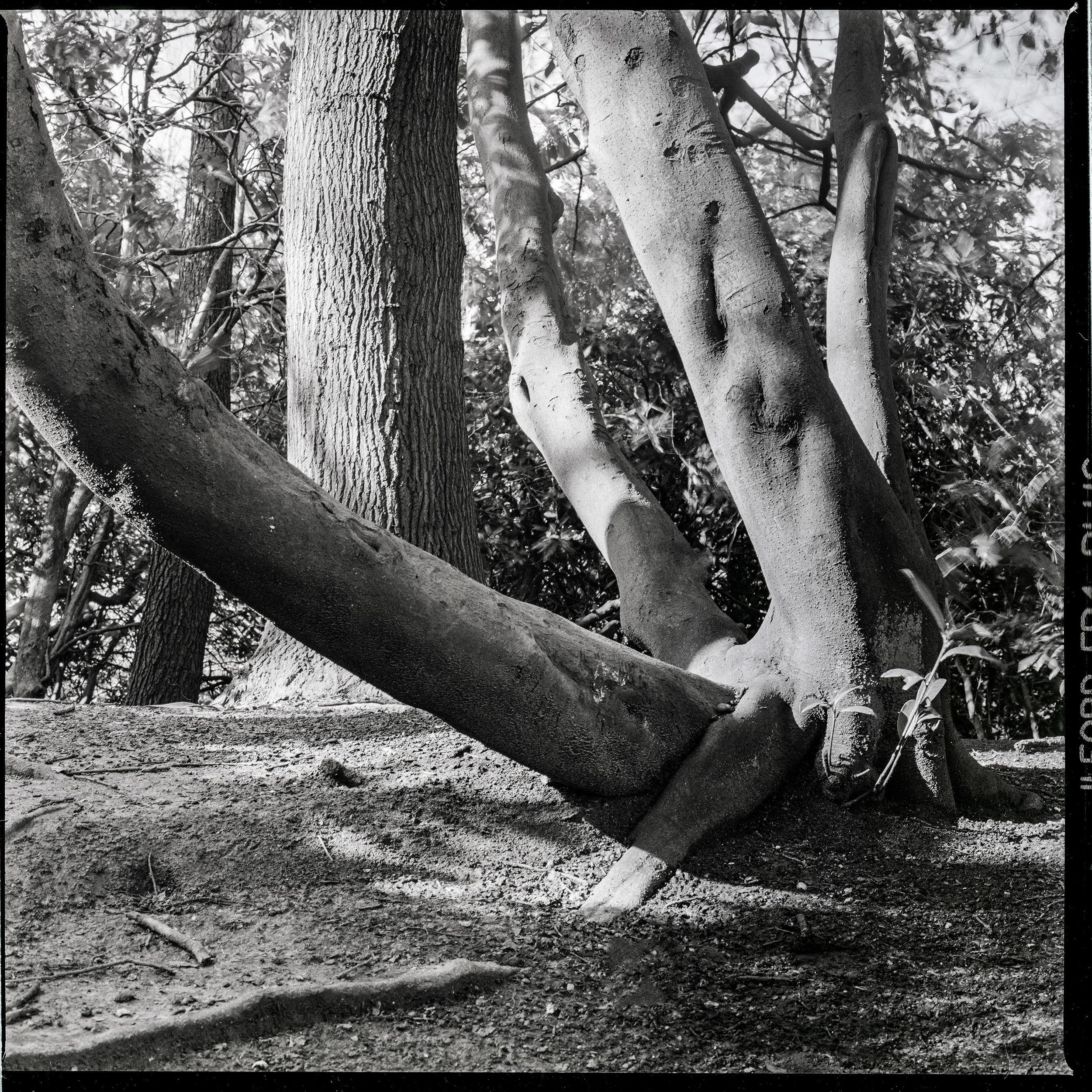 Woods, 2015