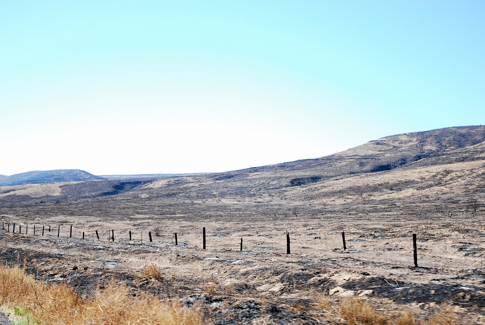 Unintended Scorched Earth Policy,  2007