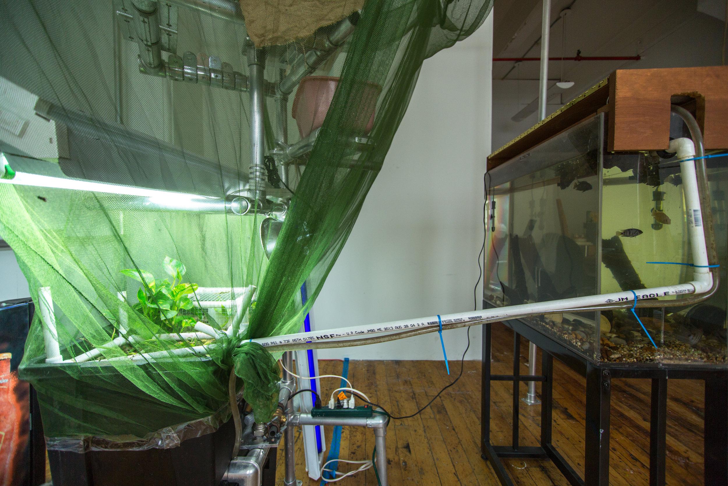Aquavermiculture_17.jpg