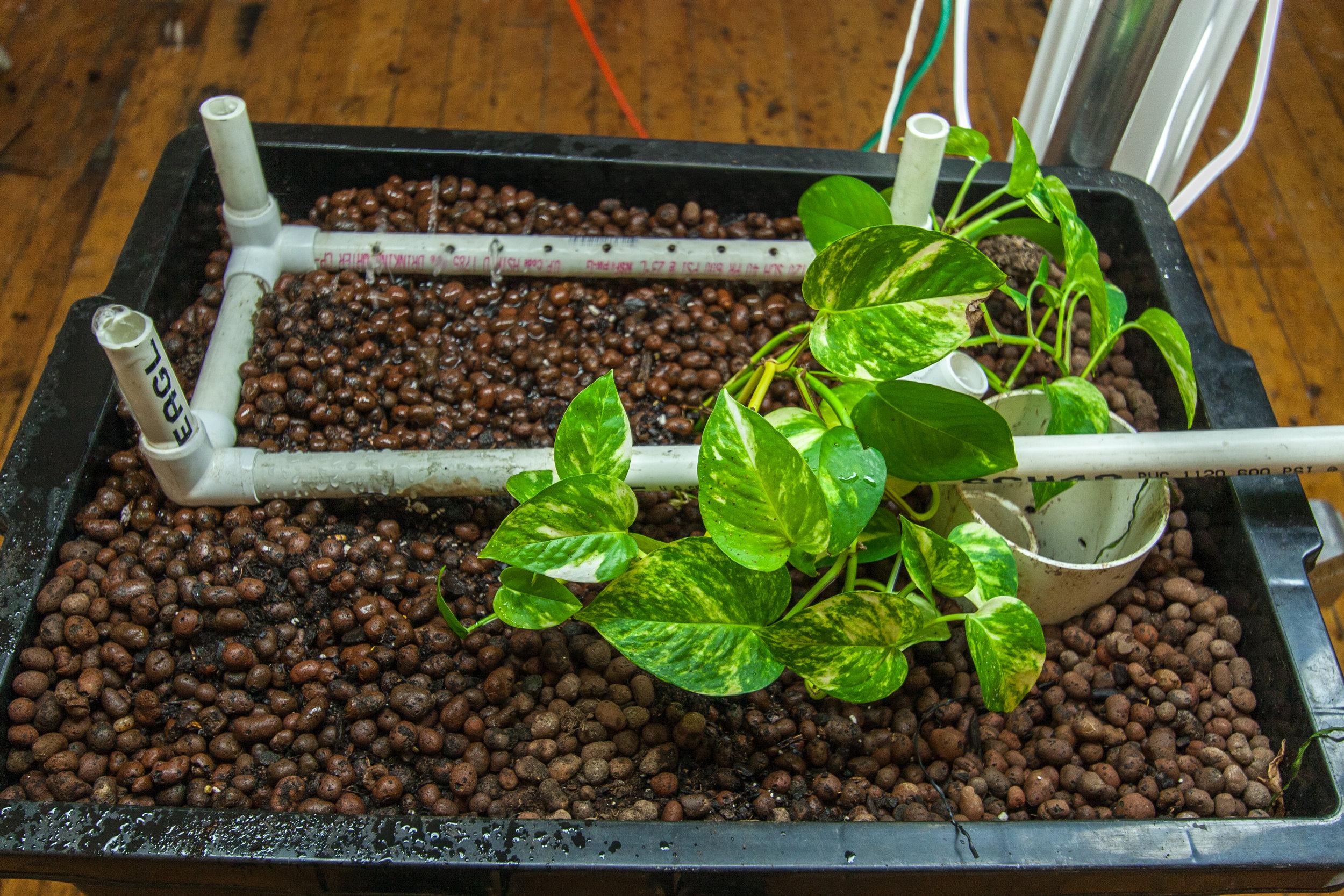 Aquavermiculture_30D_08.jpg