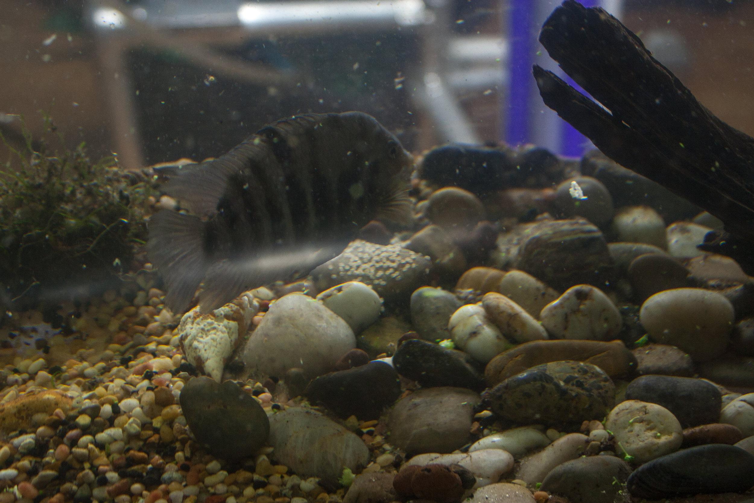 Aquavermiculture_30D_29.jpg