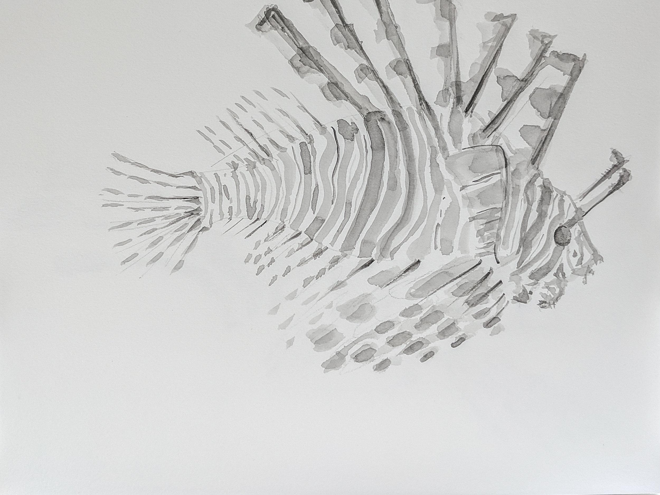 Lionfish drawing_ex_1.jpg