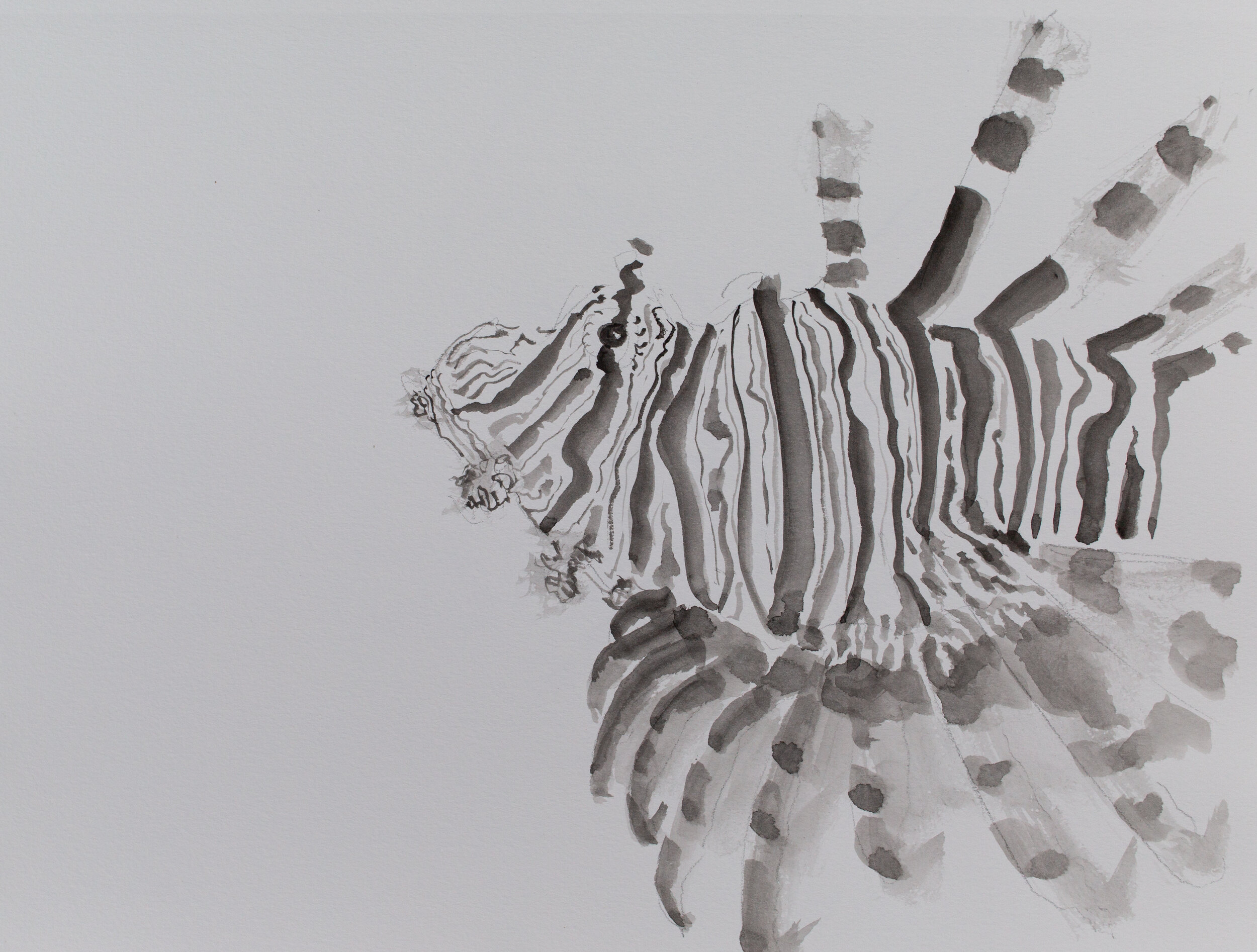 Lionfish drawing_8.jpg