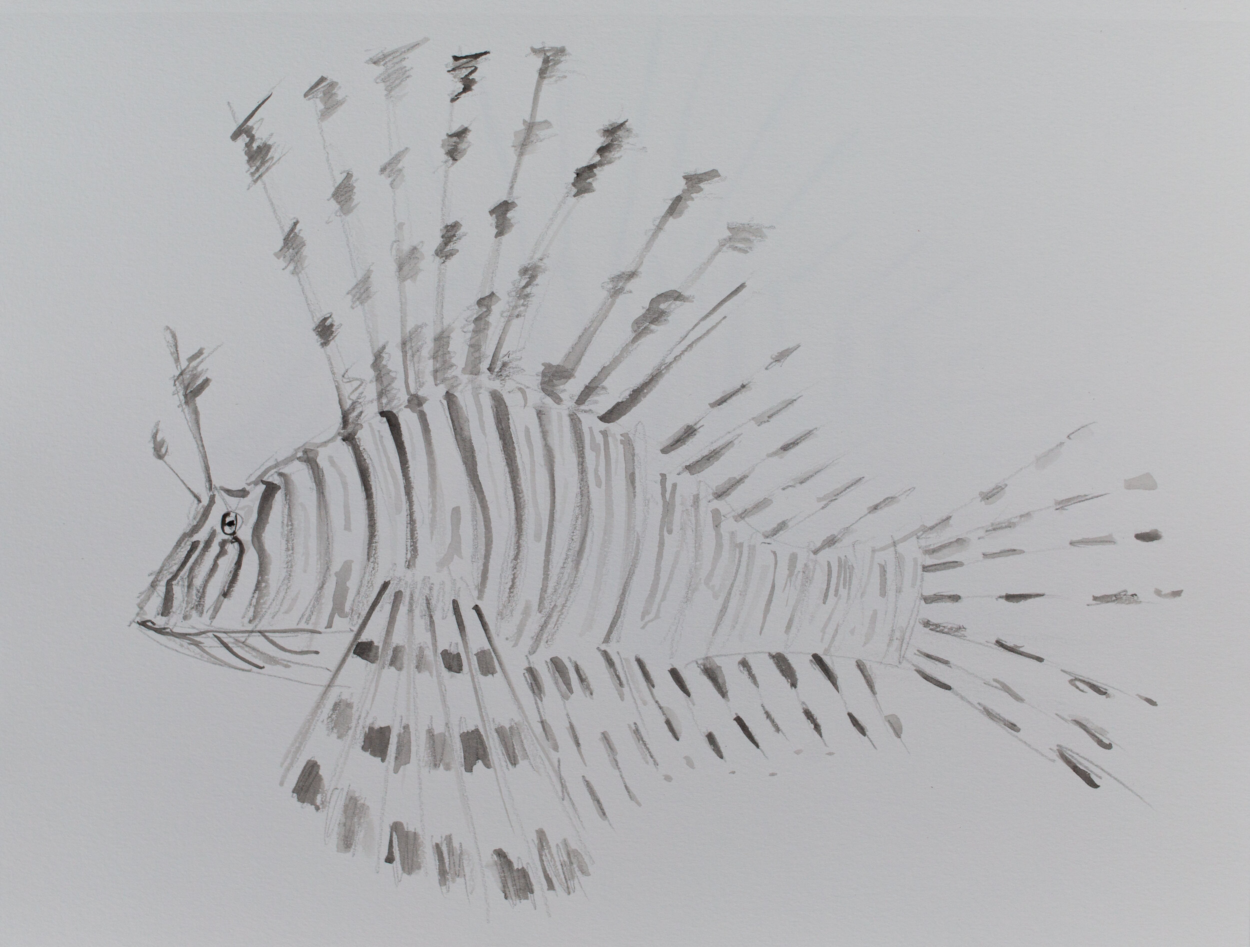 Lionfish drawing_12.jpg