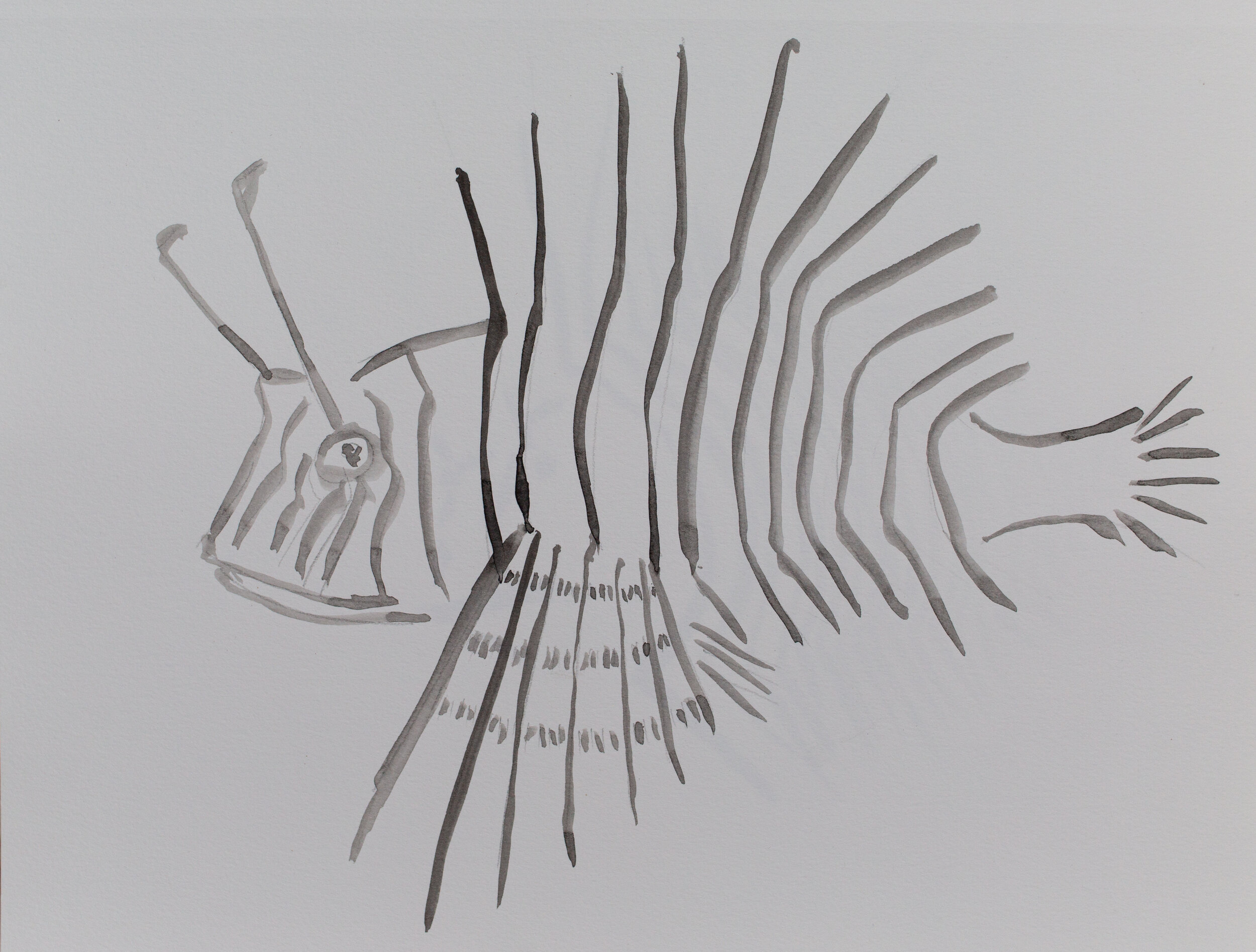 Lionfish drawing_15.jpg