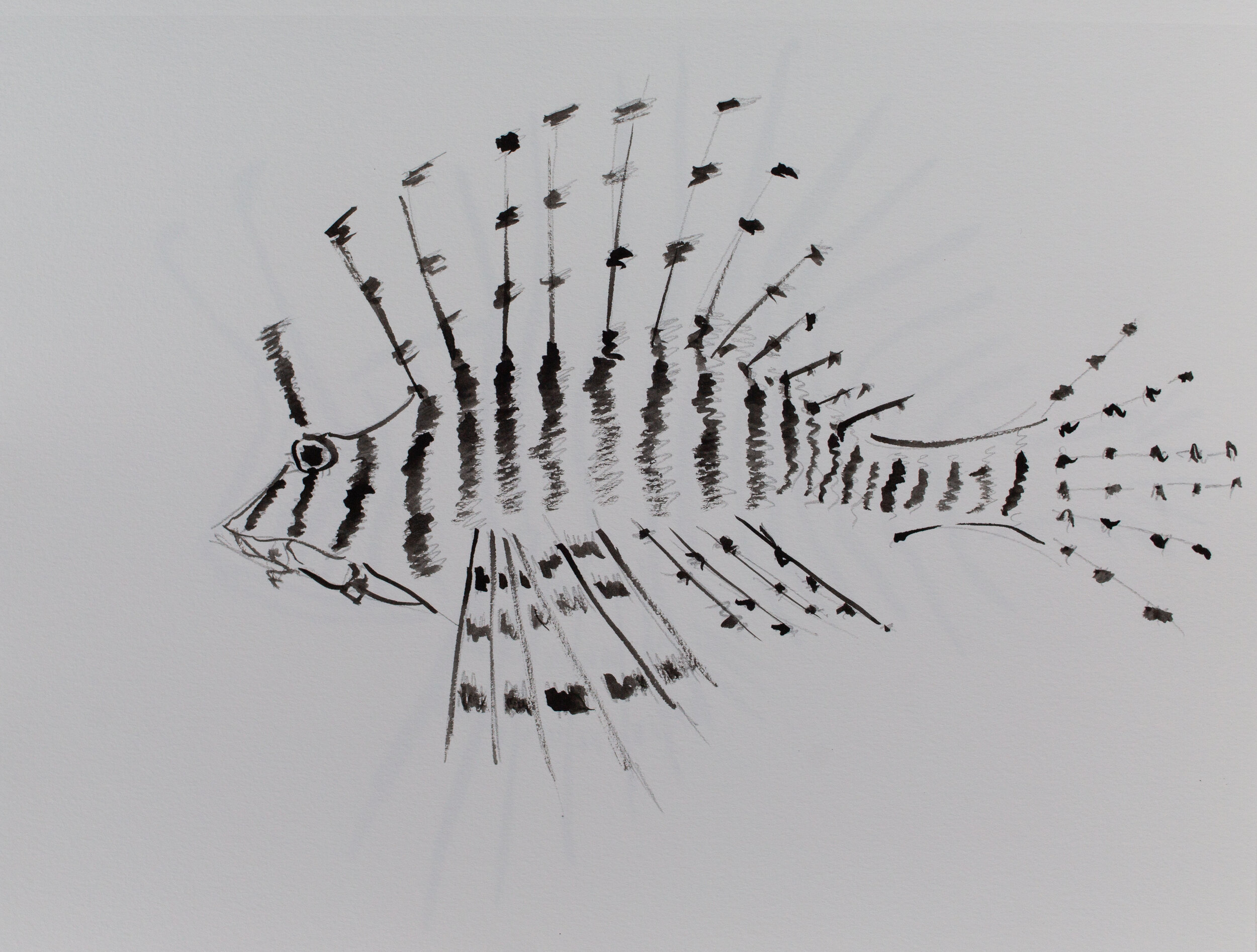 Lionfish drawing_14.jpg
