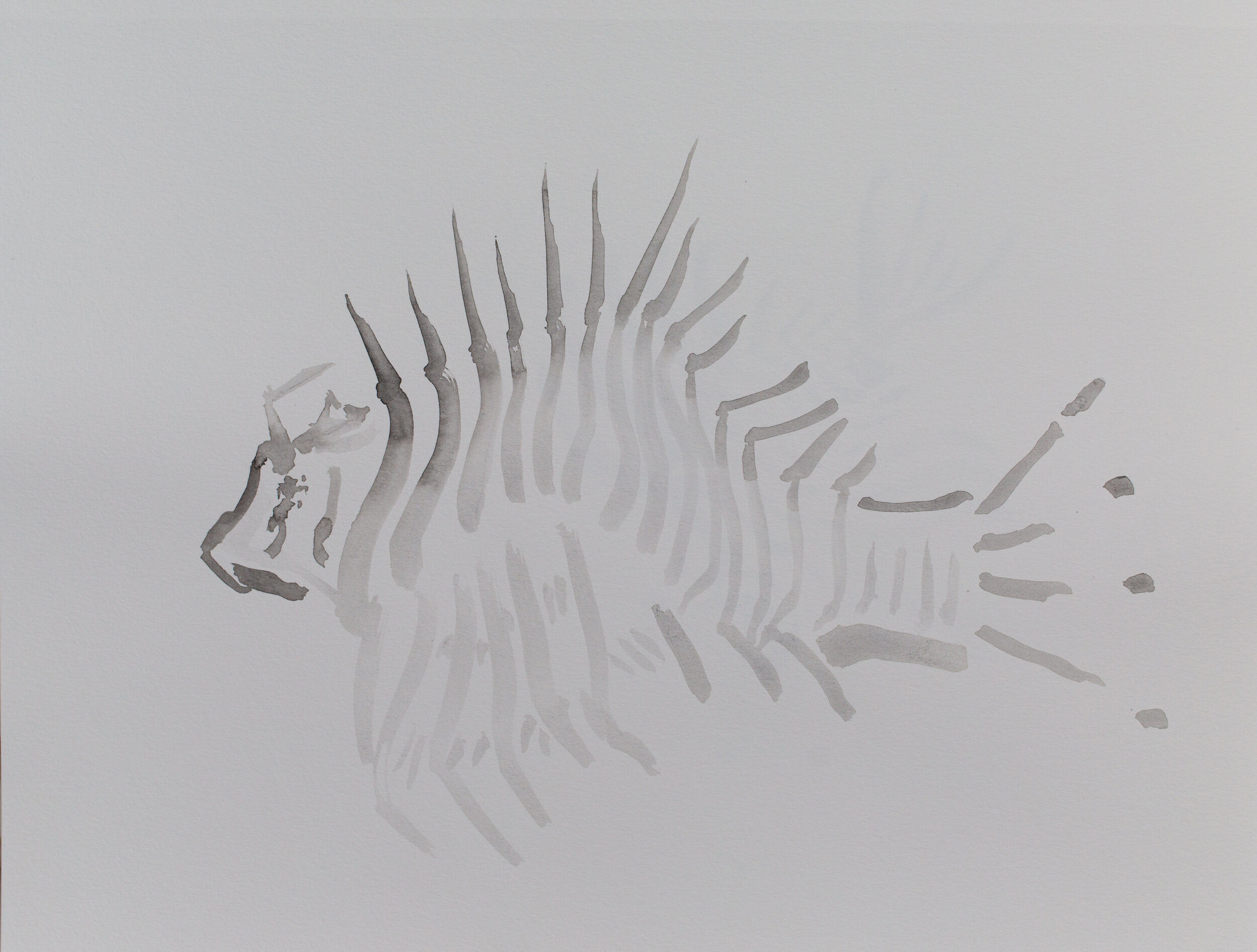 Lionfish drawing_17.jpg