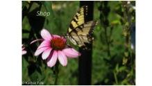 1-2butterfly.jpg
