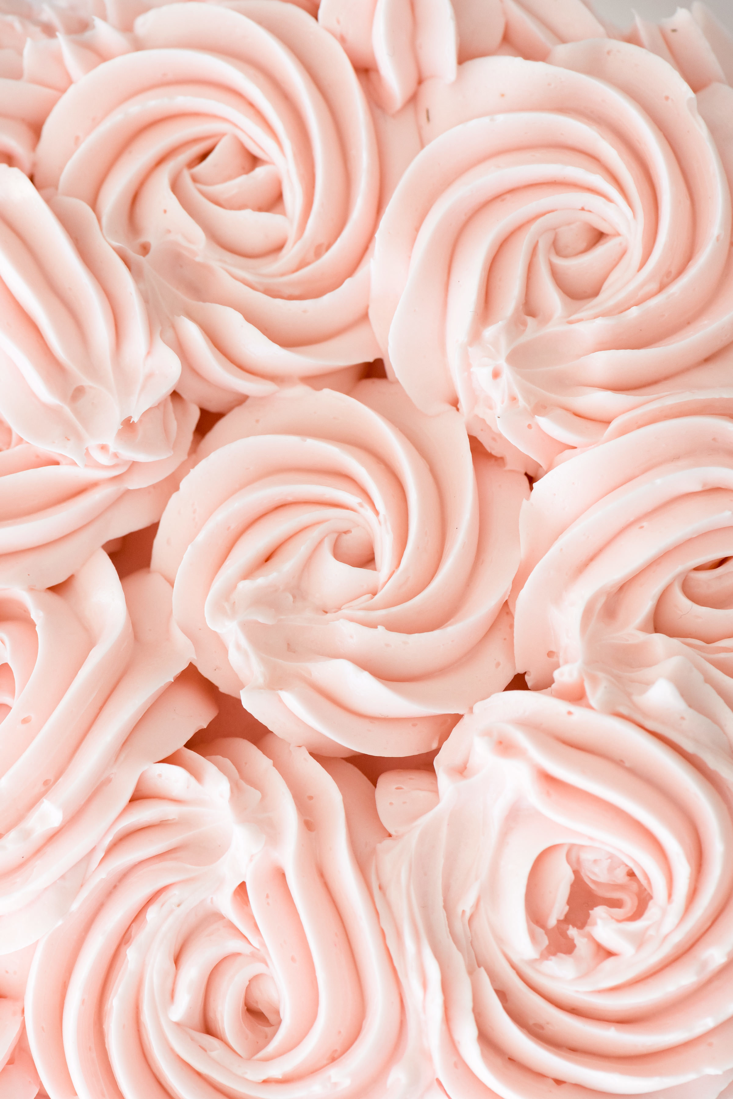 rosettes up close pink.jpg