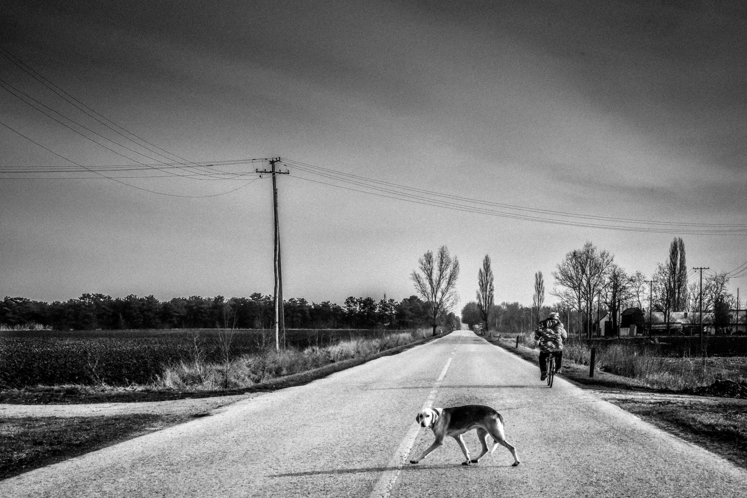 dog`s life / lonely road that connect dying villages in Vojvodina, Serbia