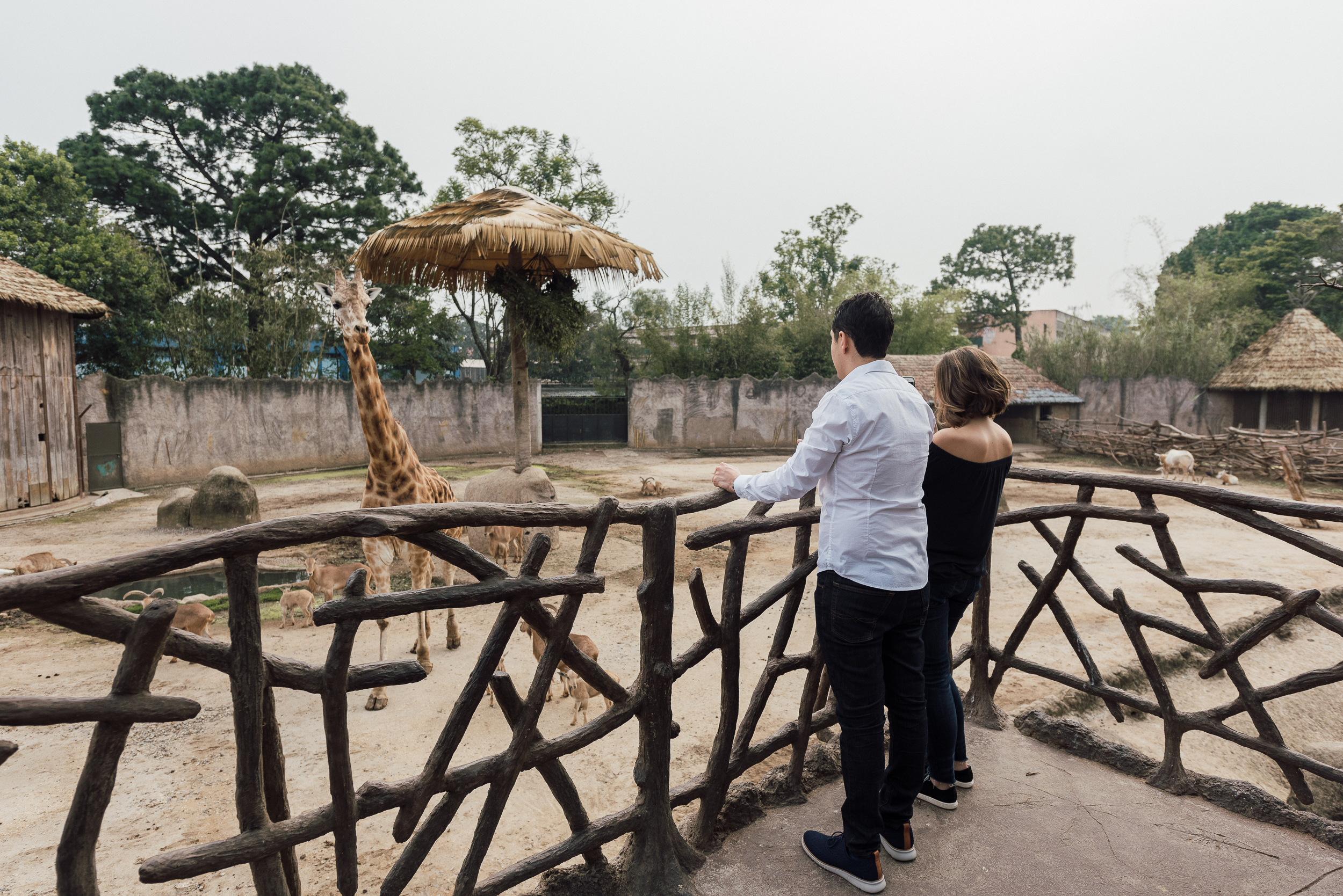 engaged in love couple in Guatemala Zoo La Aurora