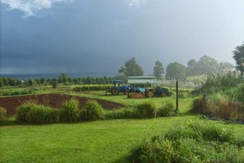 Hawaii Lychee Farm